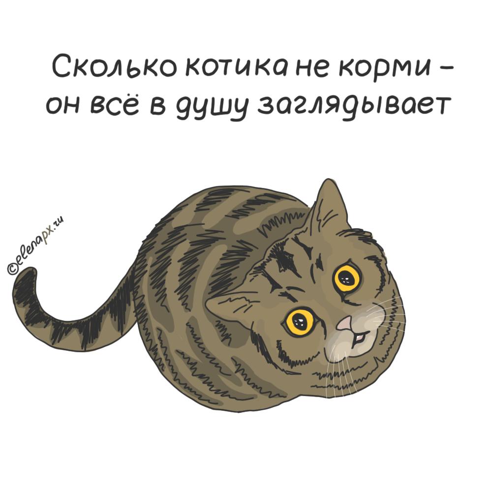 Картинка не верь коту его кормили титулует