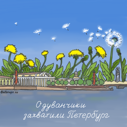 Одуванчики захватили Петербург