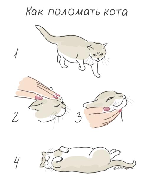 Как поломать кота