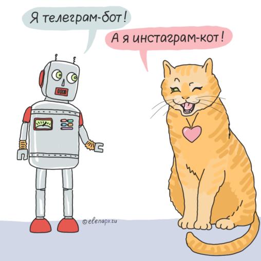 Telegram-бот и instagram-кот
