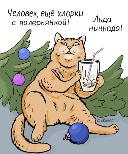 Картинка с наглым котом