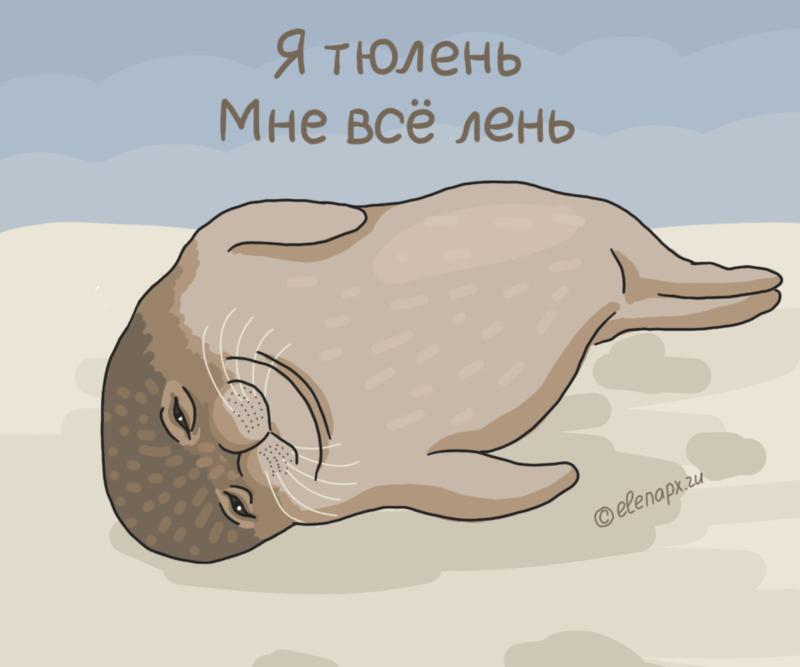 Картинка про тюленя: меня всё лень
