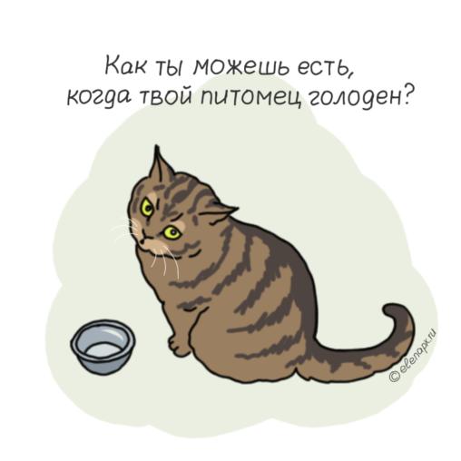 Как ты можешь есть, когда твой котик голоден