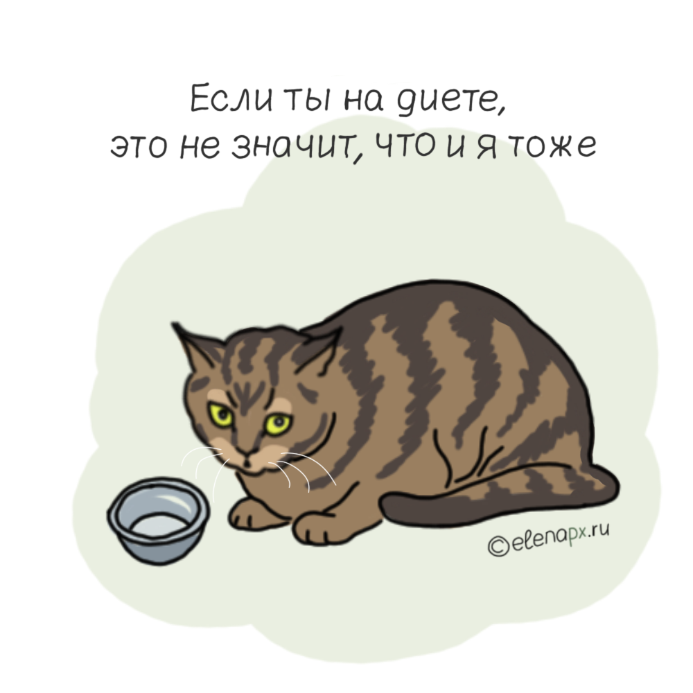 Ты на диете, а твой котик нет