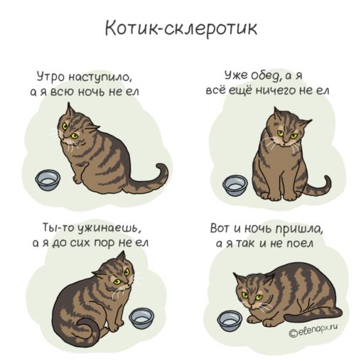котик-склеротик