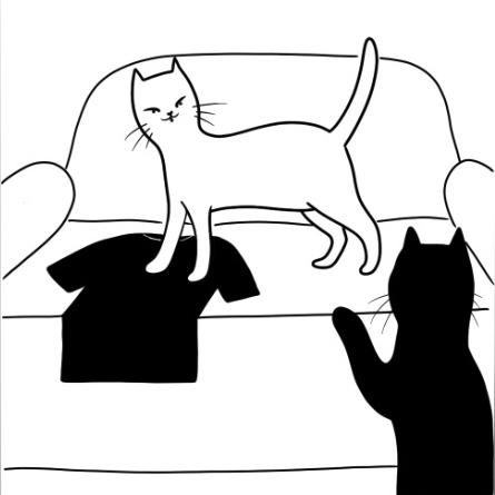 черные и белые коты
