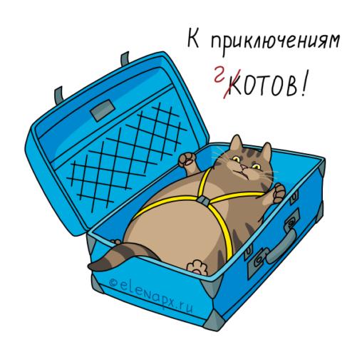 К приключениям котов